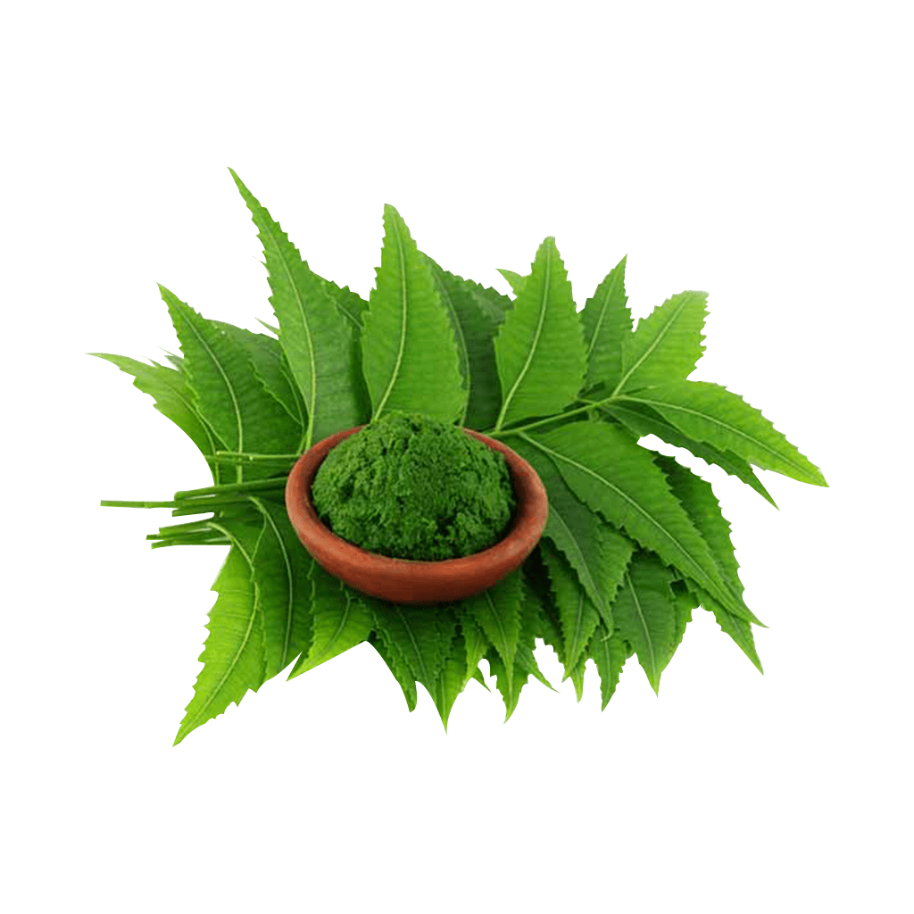 Neem leaf powder is counted as effective pest repellent, mosquito repellent and daily bath solution